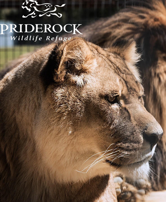 , Animal Communications Workshop held at PrideRock