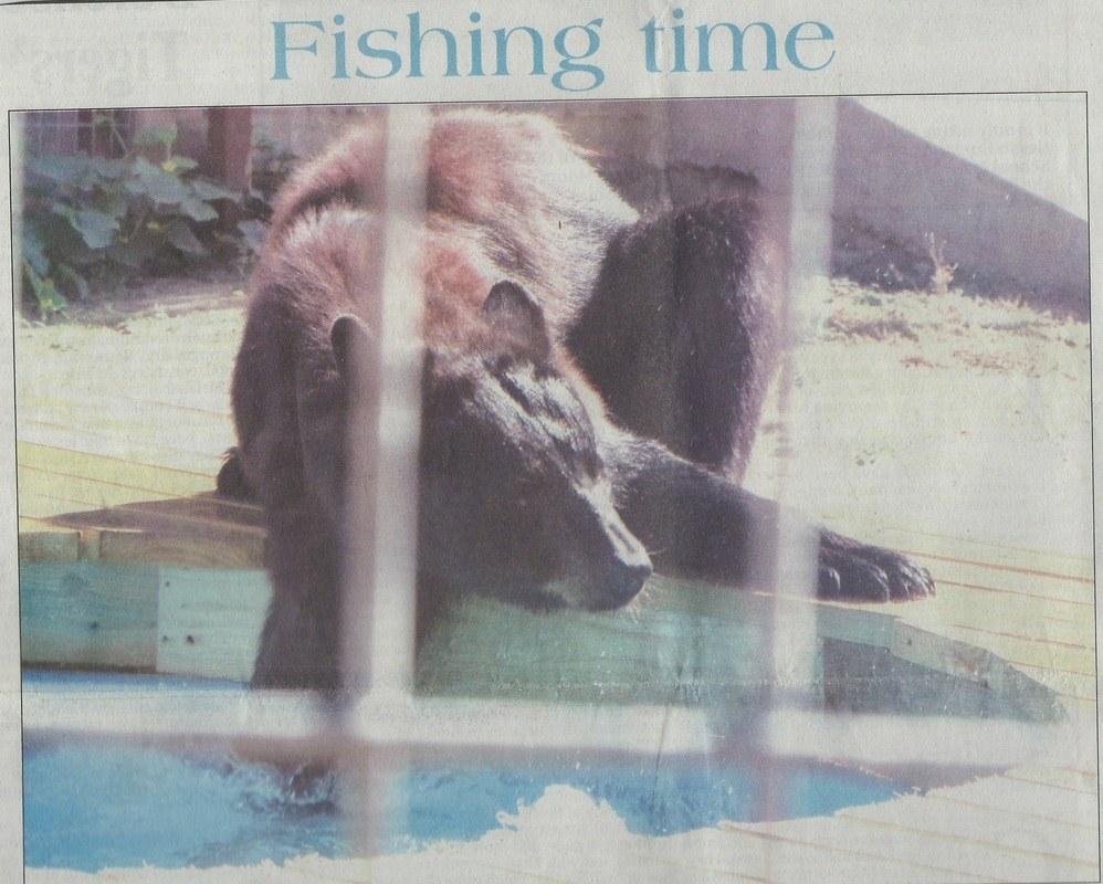 , Bears Explore new digs at PrideRock, The Terrell Tribune, Sept. 24, 2016