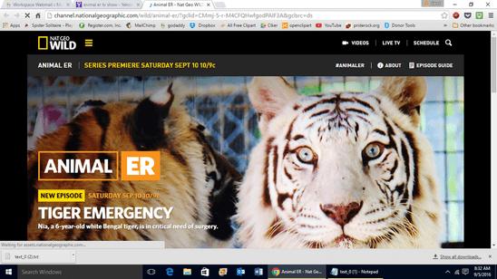 , PrideRock Wildlife Refuge's white tiger, Nia, was on TV!