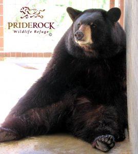 , Top 10 Things about PrideRock Wildlife Refuge