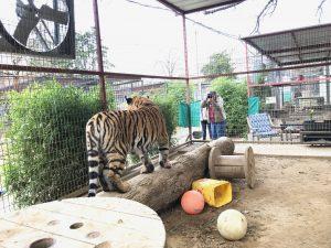 , Spring Workshop- Animal SensAblity
