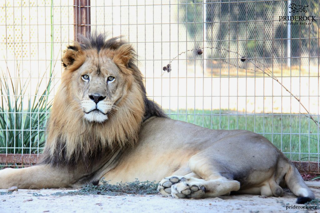 , 21 Facts You May Not Know About Big Cats