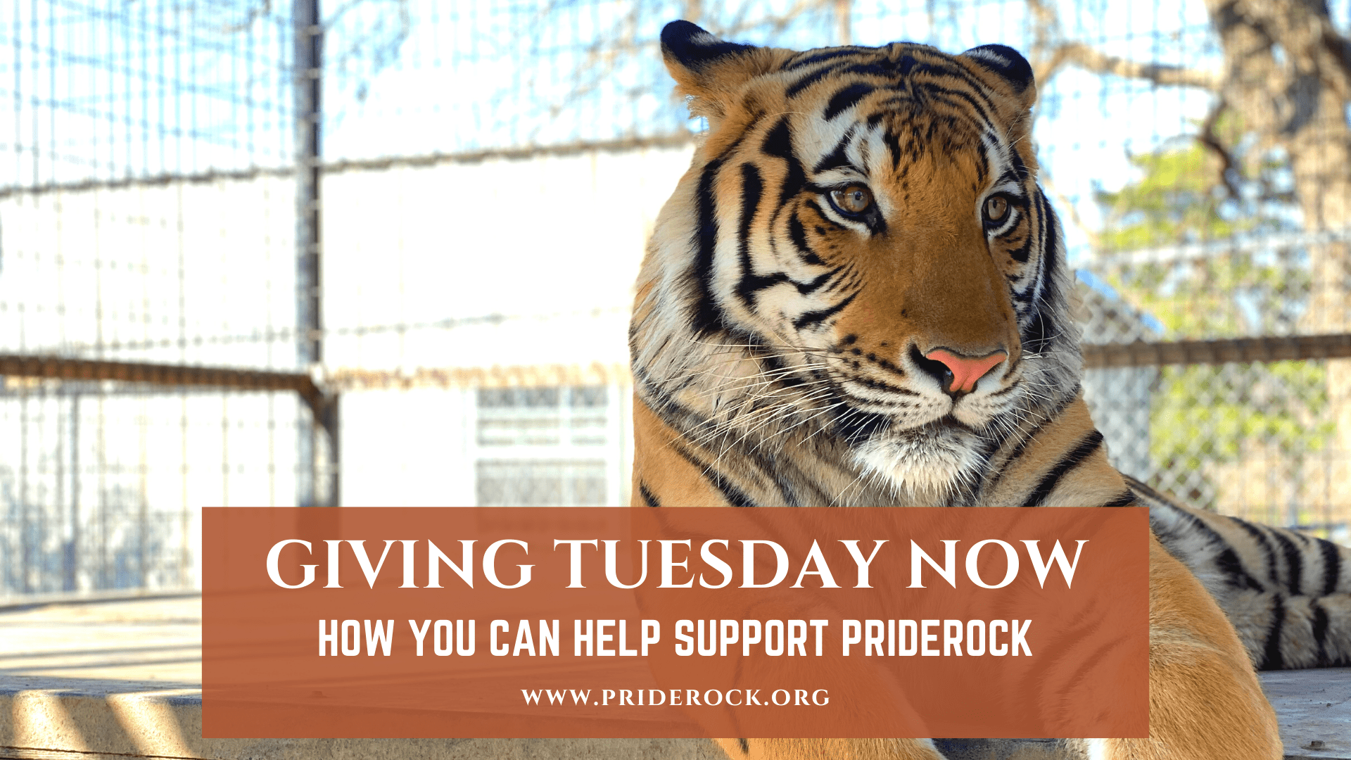 , Giving Tuesday Now – How You Can Help Support PrideRock