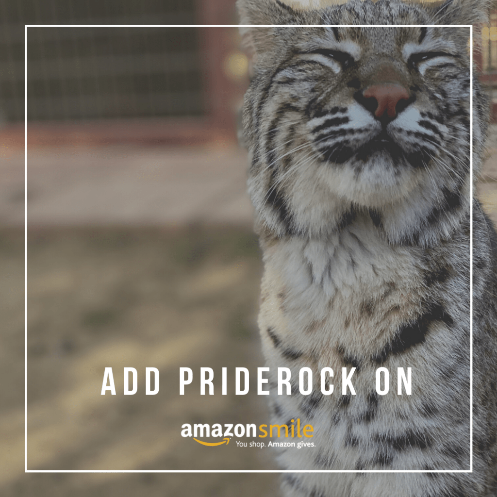 , 8 Ways To Give Back To The Residents At PrideRock