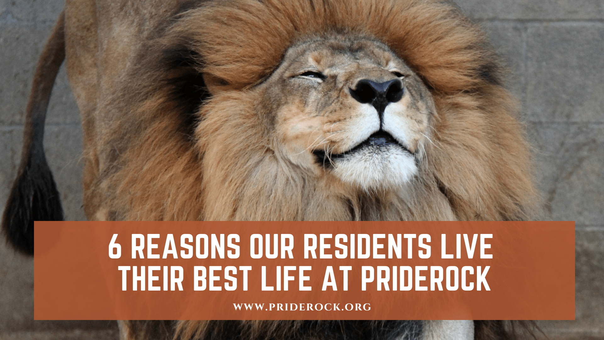 , 6 Reasons Our Residents Live Their Best Life At PrideRock