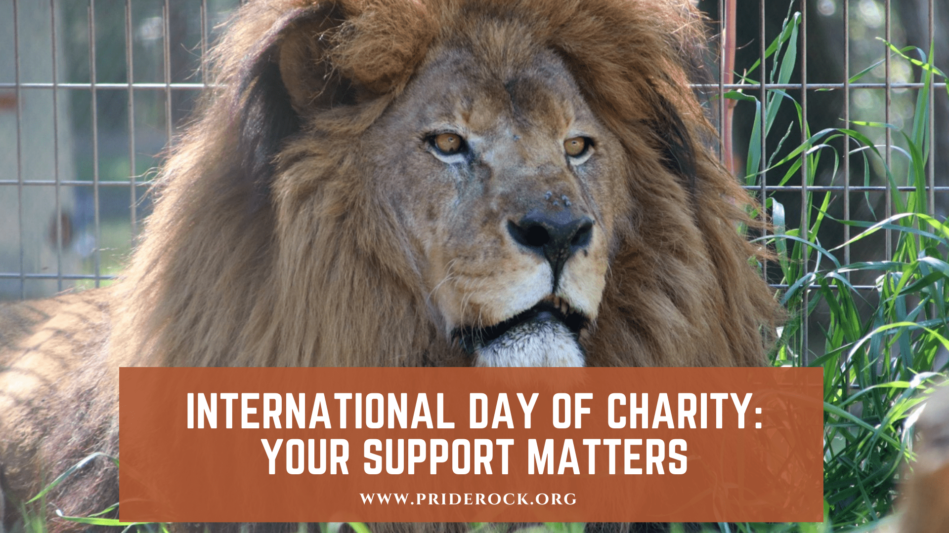 , International Day Of Charity: Your Support Matters